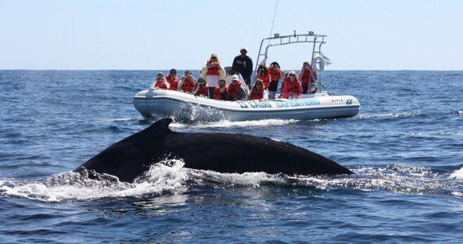 Whale Watching from Zodiac in Cabo San Lucas