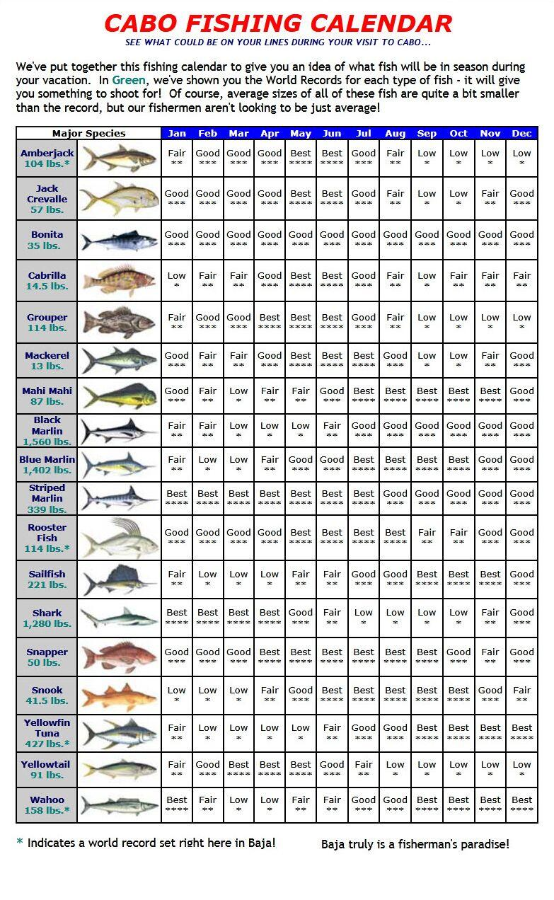 Cabo fishing charters sport fishing los cabos cabo for Best time to fish calendar