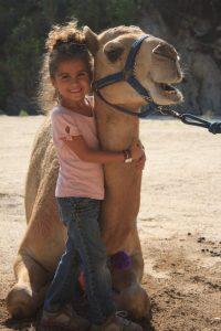 camel encounter hugging a camel in cabo san lucas at wild canyon