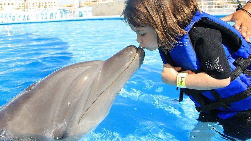 kids opportunity to swim with the dolphins in cabo san lucas, girl gives a dolphin kiss