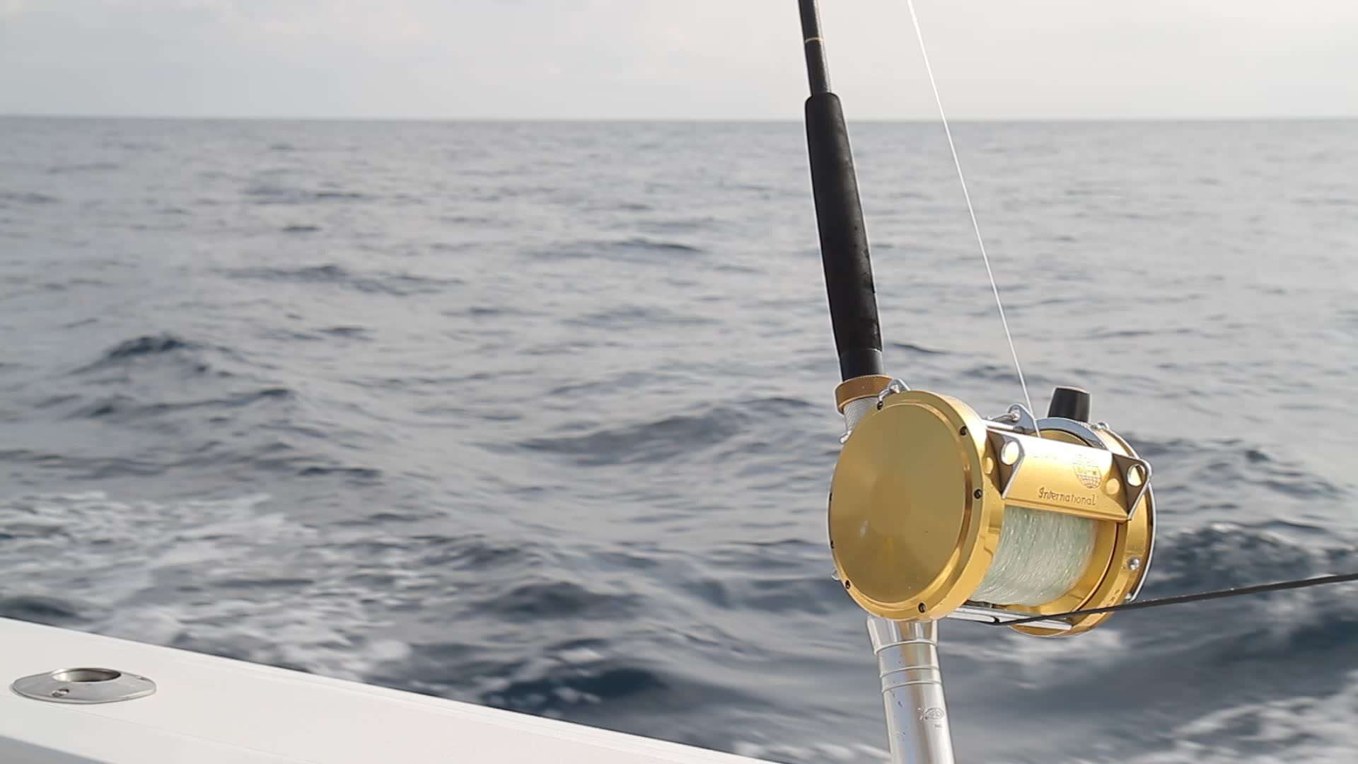 Sport fishing trawling for marlin and tuna in cabo san lucas