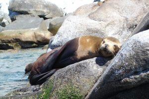 visit the sea lion colony and swim with the sealions during this espiritu santos island tour