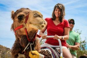 ride a camel in los cabos, wild canyon camel quest tours in cabo san lucas