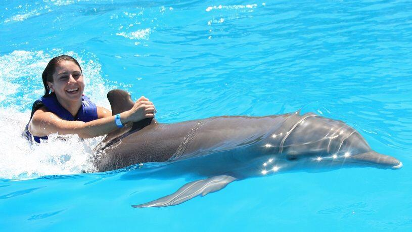 Cabo dolphins Dolphin swim program in Los Cabos cabosanlucastours