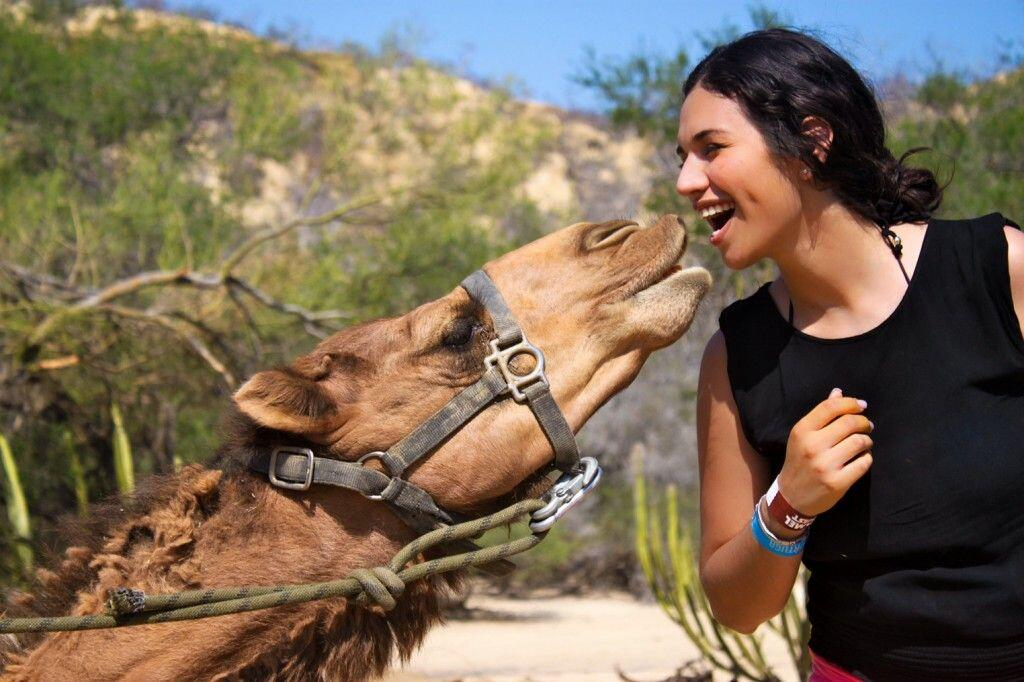 camel encounter kissed by a camels in cabo san lucas at wild canyon cabo san lucas land tours
