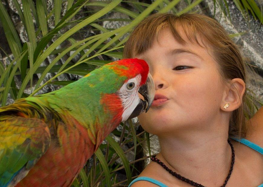 feature-girl-kissing-a-macaw